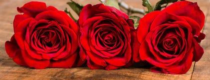 Opinião apertada de três rosas vermelhas Fotos de Stock Royalty Free