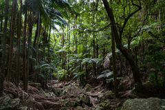 Opinião bonita da paisagem de uma selva com árvores e os montes agradáveis foto de stock