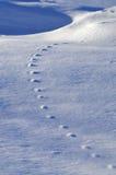 Opinião bonita do inverno com traços de animais na neve azul Imagens de Stock Royalty Free