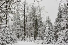 Opinião bonita do inverno na árvore da neve foto de stock