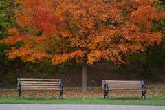 Opinião bonita do outono Imagem de Stock