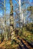 Opinião bonita do outono com uma escadaria de madeira no meio de uma floresta foto de stock royalty free