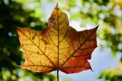 Opinião bonita do outono na folha Fotografia de Stock Royalty Free