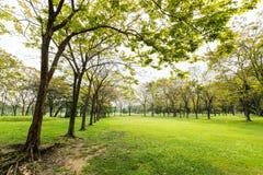 Opinião bonita do parque Imagem de Stock Royalty Free