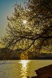 Opinião bonita do por do sol no lago artificial de tirana fotos de stock