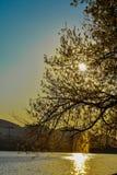Opinião bonita do por do sol no lago artificial de tirana imagem de stock