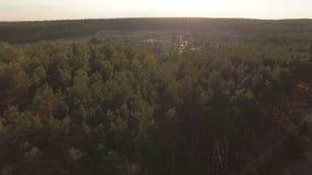 Opinião bonita ecológica da floresta do pinho da antena video estoque