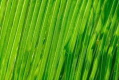 Opinião bonita lindo, fresca do close up das folhas de palma com gotas de água após o fundo da chuva foto de stock