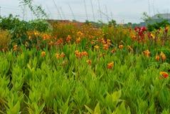 Opinião da área da plantação das flores, fundos obscuros foto de stock