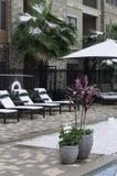 A opinião da associação com as palmeiras cobertas com a neve Fotos de Stock