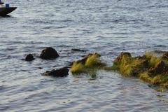 Opinião da costa Imagem de Stock Royalty Free