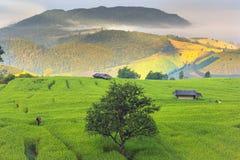 Opinião da exploração agrícola do arroz Foto de Stock
