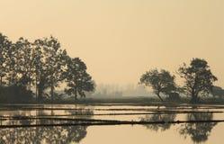 Opinião da exploração agrícola dos arrozes fotos de stock
