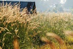Opinião da exploração agrícola dos arrozes imagem de stock