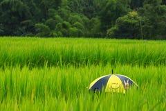 Opinião da exploração agrícola dos arrozes imagem de stock royalty free