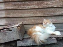Opinião da expressão do gato foto de stock