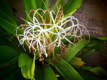 opinião da flor com folha verde imagens de stock royalty free
