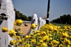 Opinião da flor na porta da Índia Fotografia de Stock