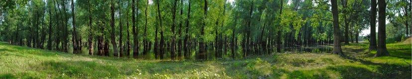 Opinião da floresta Fotografia de Stock Royalty Free