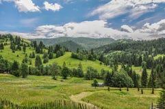 Opinião da floresta de Pitoresque Fotografia de Stock Royalty Free
