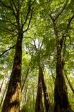 Opinião da floresta do solo fotos de stock royalty free