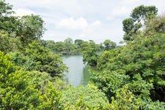 Opinião da floresta e do lago Fotos de Stock