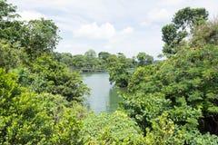 Opinião da floresta e do lago Imagens de Stock