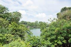 Opinião da floresta e do lago Fotografia de Stock Royalty Free