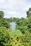 Opinião da floresta e do lago Imagens de Stock Royalty Free