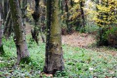 Opinião da floresta no parque Fotos de Stock