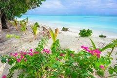 Ilha tropical fotos de stock royalty free