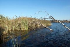 Opinião da ilha, reserva natural de Rietvlei, África do Sul Foto de Stock