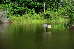 Opinião da lagoa foto de stock