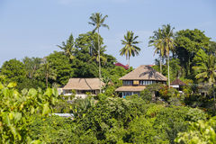 Opinião da manhã de palmeiras e de casas verdes do coco em Ubud, Bali, Indonésia Fotos de Stock Royalty Free