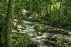 Opinião da mola de pouco Stony Creek fotos de stock