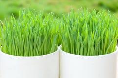 Opinião da natureza do close up e Bokeh abstrato da folha verde no fundo verde borrado foto de stock