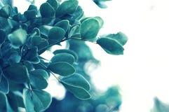 Opinião da natureza do close up da folha verde Foto de Stock Royalty Free