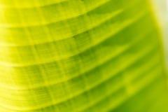 Opinião da natureza do close up da folha verde na luz solar Imagem de Stock