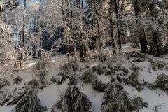 Opinião da neve da floresta Fotografia de Stock
