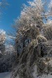 Opinião da neve do inverno foto de stock royalty free