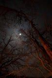 Opinião da noite das árvores iluminadas pela fogueira contra a lua Fotografia de Stock Royalty Free