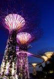 Opinião da noite de árvores super no jardim pela baía Imagem de Stock Royalty Free