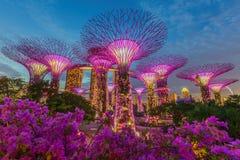Opinião da noite do bosque de Supertree em jardins pela baía Imagens de Stock Royalty Free