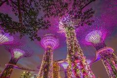 Opinião da noite do bosque de Supertree em jardins pela baía Fotografia de Stock Royalty Free