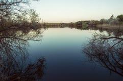 Opinião da noite do lago através dos ramos Fotografia de Stock Royalty Free
