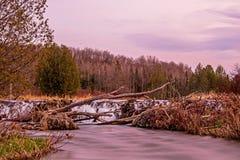 Opinião da noite da represa do castor no rio em Ontário, Canadá do pinho foto de stock royalty free