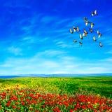 Opinião da paisagem Foto de Stock Royalty Free
