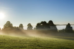 Opinião da paisagem da manhã através do prado nevoento no Polônia foto de stock