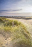 Opinião da paisagem da noite do verão sobre dunas de areia gramíneas na praia Fotos de Stock Royalty Free