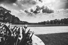 Opinião da paisagem do parque através das flores preto e branco fotos de stock